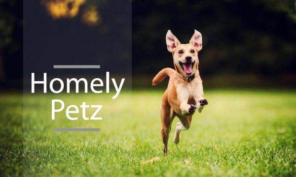 Homely Petz